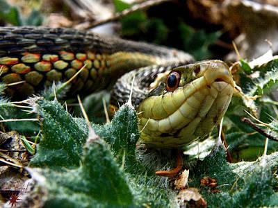 Garter Snake Photograph - Garter by Scott Hovind