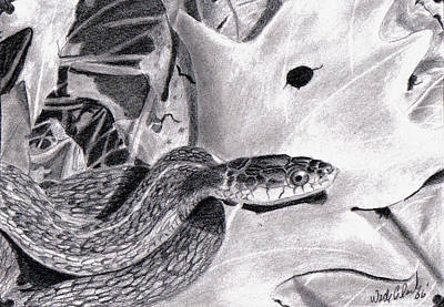 Drawing - Garter Snake by Wade Clark