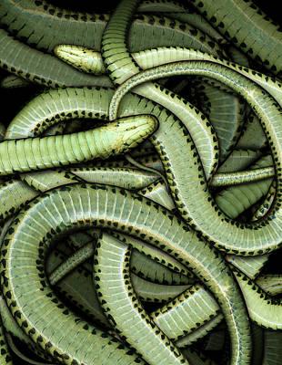 Digital Art - Garter Snakes Pattern by James Larkin