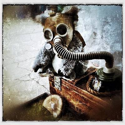 Gas Mask Koala Print by Natasha Marco