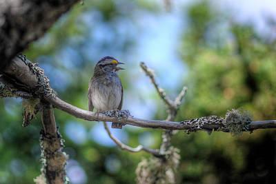 Digital Art - Gaspe Bird by Patrick Groleau