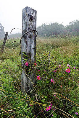 Photograph - Gate Post And Rugosa Roses by Marty Saccone