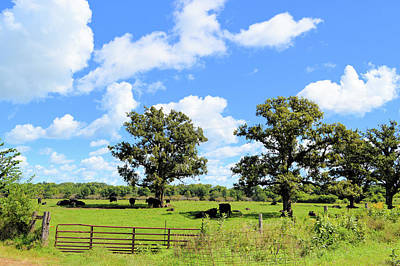 Photograph - Gated Community by Bonfire Photography