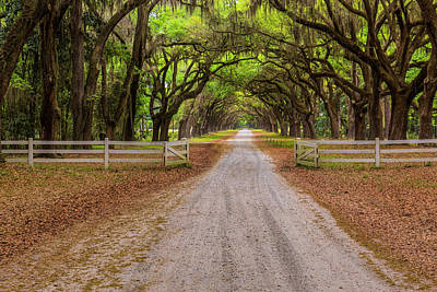 Photograph - Gated Plantation by Jon Glaser