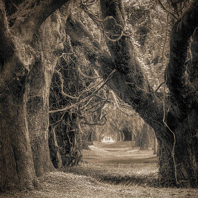 Photograph - Gateway Through An Avenue Of Live Oaks by Chris Bordeleau