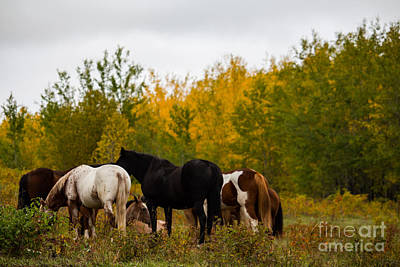 Horse Photograph - Gather Around by Jamie Haley
