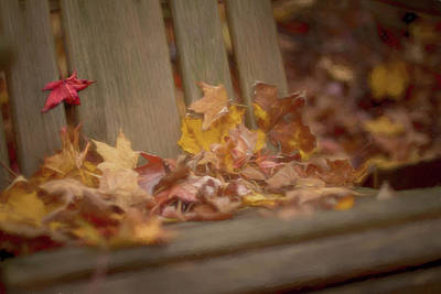 Southern Indiana Autumn Photograph - Gathered Leaves by Andrea Kappler