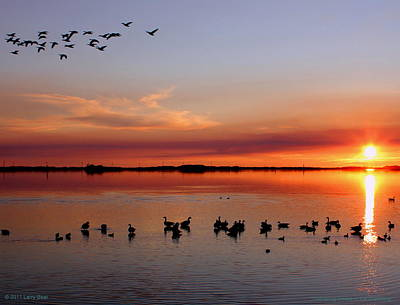 Photograph - Gathering Geese In The Gloaming by Larry Beat