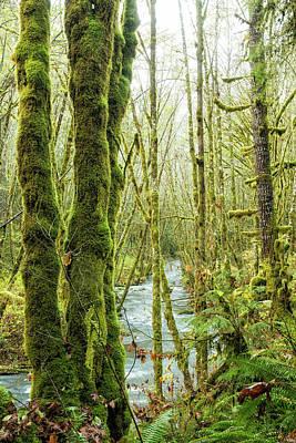 Photograph - Gathering Moss by Belinda Greb