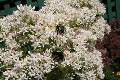 Photograph - Gathering Nectar by Aggy Duveen
