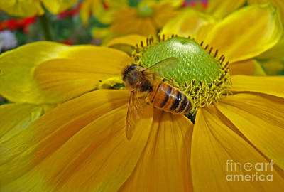 Gathering Nectar Art Print