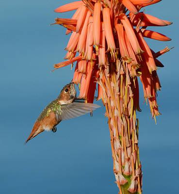 Photograph - Gathering Nectar by Fraida Gutovich