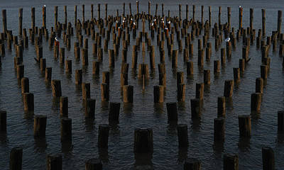 Photograph - Gathering On The Hudson by Leon deVose