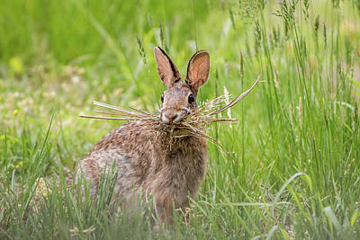 Photograph - Gathering Rabbit by Terry DeLuco