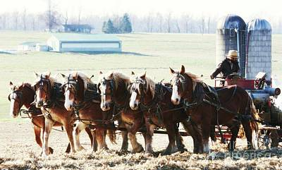 Photograph - Gathering Up The Hay With A Six Horse Teamin Lancaster County Pennsylvania by Polly Peacock