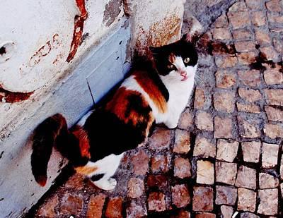 Of Calico Cat Photograph - Gato Da Agua by Dora Hathazi Mendes