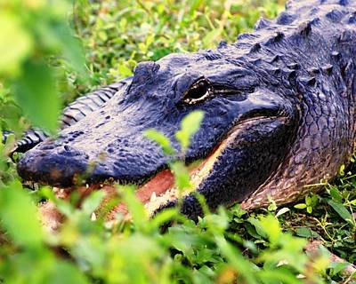 Aligator Photograph - Gator 1 by Marty Koch