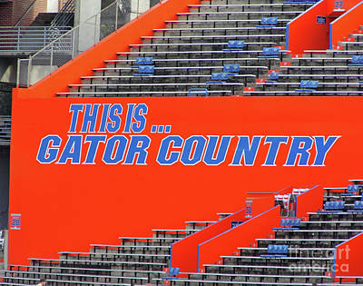 Photograph - Gator Country by D Hackett