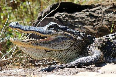 Art Print featuring the photograph Gator Grin  by Christy Pooschke