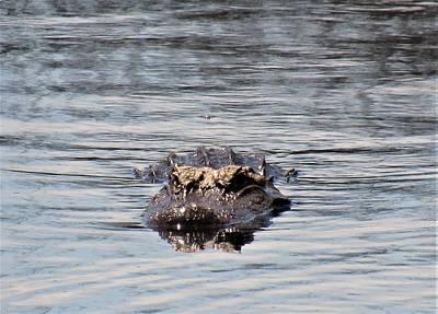 Photograph - Gator Guardian by Joshua Bales