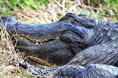 Gator Head Art Print by Barbara Bowen