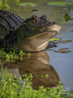 Photograph - Gator Head Reflection by Tom Claud