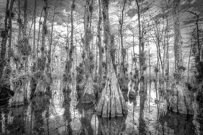 Photograph - Gator Hook Swamp Bw by Bill Martin