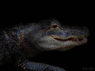 Gator In Black Art Print