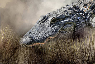 Gators Wall Art - Photograph - Gator In The Grass by Donna Kennedy
