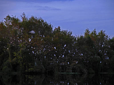 Egret Landscape Photograph - Gator Lake by Juergen Roth