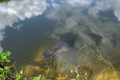 Photograph - Gator Lurking by Timothy Lowry