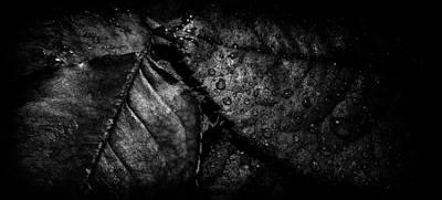 Photograph - Gator by Matti Ollikainen