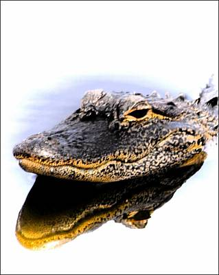 Photograph - Gator Profile Reflection by Sheri McLeroy