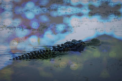 Photograph - Gator by Richard Goldman