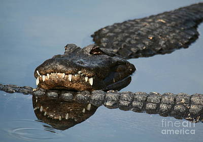 Photograph - Gator Tail by Myrna Bradshaw