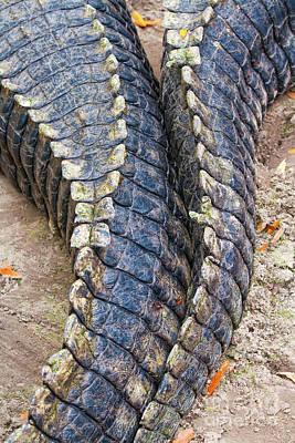 Gator Tails Art Print