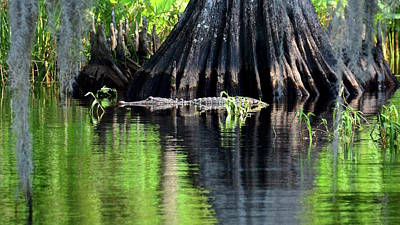 Photograph - Wild Florida by Carol Bradley