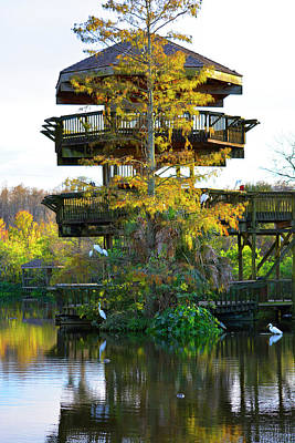 Photograph - Gator Tower by Josy Cue
