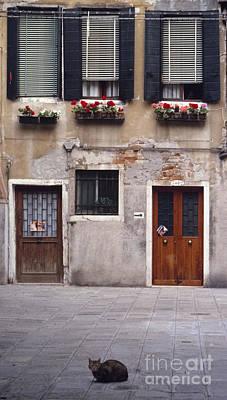 Photograph - Gatti Di Venezia by Sandro Rossi