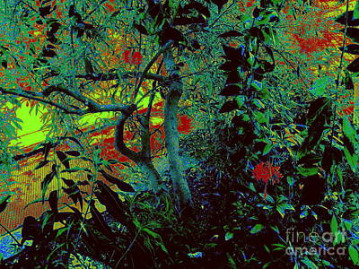 Photograph - Gauguin Garden 2 by Nancy Kane Chapman
