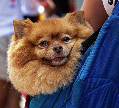 Photograph - Gay Pride Parade Nyc 6_24_2018 Pet Dog by Robert Ullmann