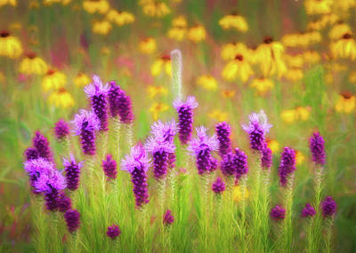Photograph - Gayfeather Wildflower Impressions by James Barber