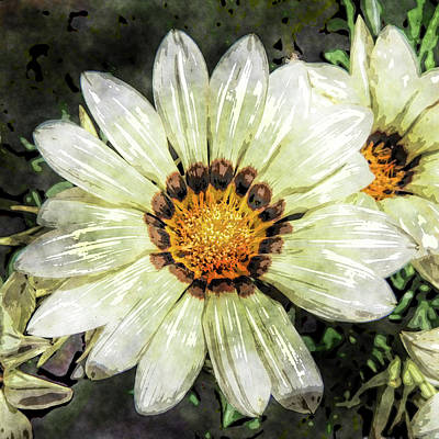 Photograph -  Gazania Blossom  by HH Photography of Florida