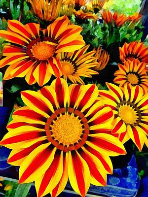 Photograph - Gazania Splendour by Dorothy Berry-Lound