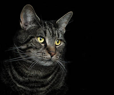 Black Cat Photograph - Gaze  by Paul Neville