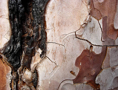 Photograph - Gaze - Tree Bark Portrait by Elena Schaelike