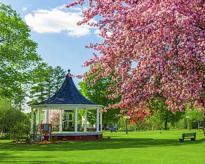 Photograph - Gazebo And Blossoms by Tim Kirchoff