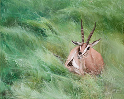 Gazelle In The Grass Art Print by Joshua Martin