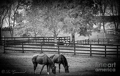 Photograph - Grazing Horses by Les Greenwood