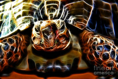 Gazing Turtle Art Print